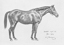 Munnings's second study of Warrior